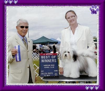 wysteria havanese ch wysteria s a wink a wave grandview havanese