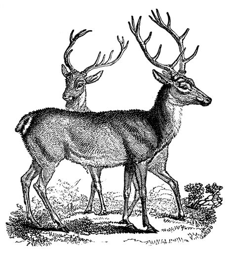 printable christmas deer vintage clip art lovely deer christmas the graphics