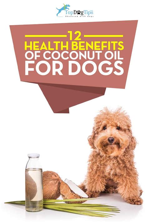 is coconut for dogs 12 health benefits of coconut for dogs top tips