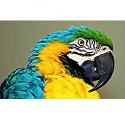 Cute Macaw Parrot Desktop HD Wallpapers  Wallapers For Free