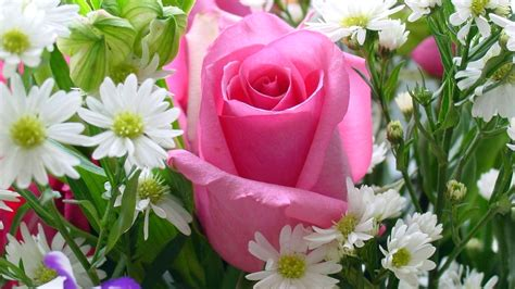 abbeville floral wallpaper pink natural pink rose flowers flower wallpapers nature images