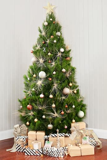 real christmas tree sydney two delivery runs every week to all sunhine coast areas