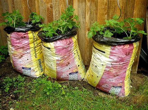 kartoffel gestell kartoffelanbau im prinzessinnengarten projektbericht