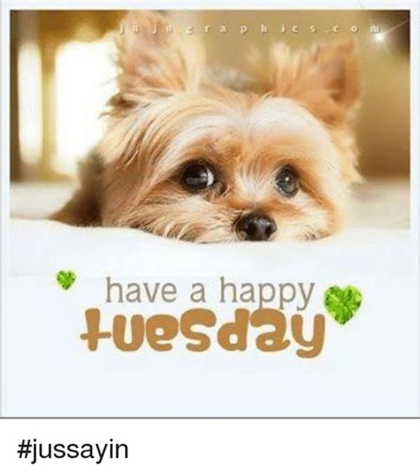 Happy Tuesday Meme - tuesday meme funny happy tuesday pictures