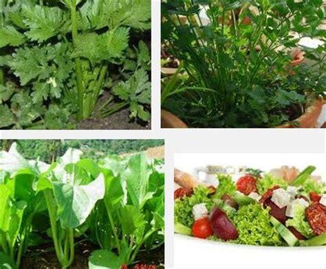 menanam lavender hidroponik cara menanam sayuran salad cara menanam sayur fruit