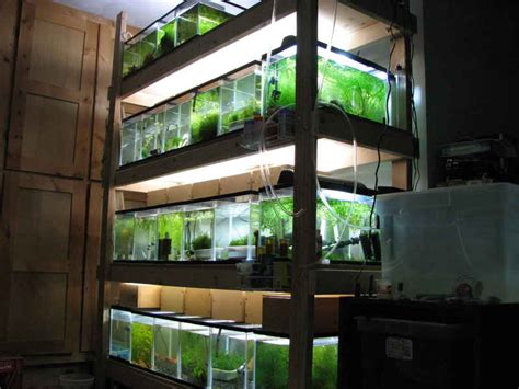 shelves for fish tanks