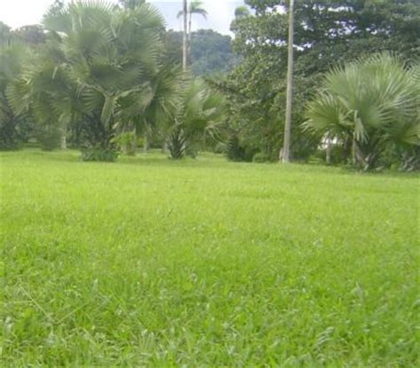 Limbe Botanic Garden Botanic Garden Jungle Tour Half Day Tour In Cameroon