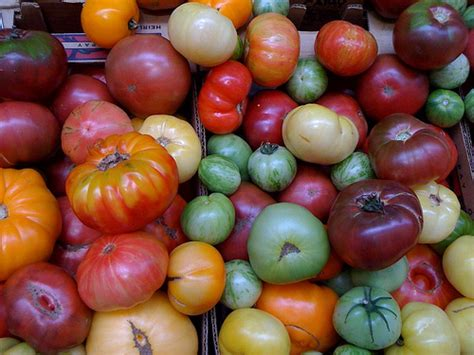 Sadly Tomatoes Are Not In Season Right Now by Heirloom Tomatoes Are In Season Now What S Your Favorite