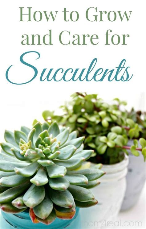 how to grow and care for succulents gardens inspiration and succulents