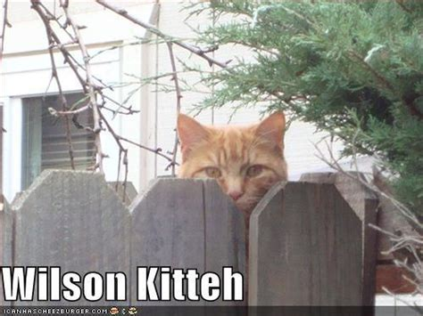 wilson kitteh home improvement tv show photo 22385538