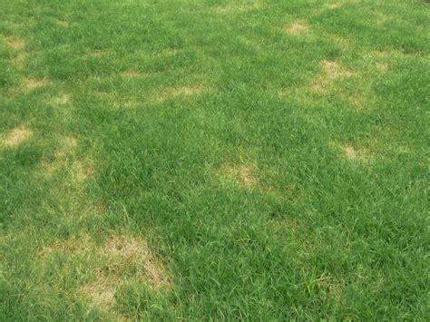 Rasen Braune Stellen 4934 by Gelbe Flecken Und Trockene Stellen Im Rasen