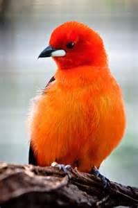 pretty little orange bird god s beautiful creation