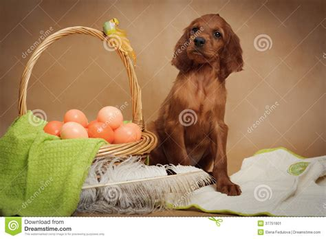 puppy eggs puppy and basket with easter eggs stock image image 37751801