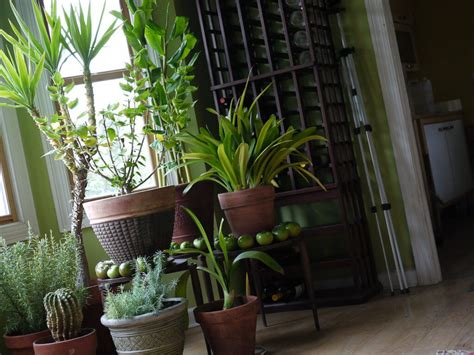 common house plants uk common causes of indoor air pollution how to fight it koru architects