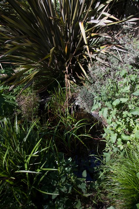 what do backyard frogs eat more on starting a backyard native frog pond backyard roots gogo papa