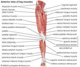 Operation ap labeled muscles
