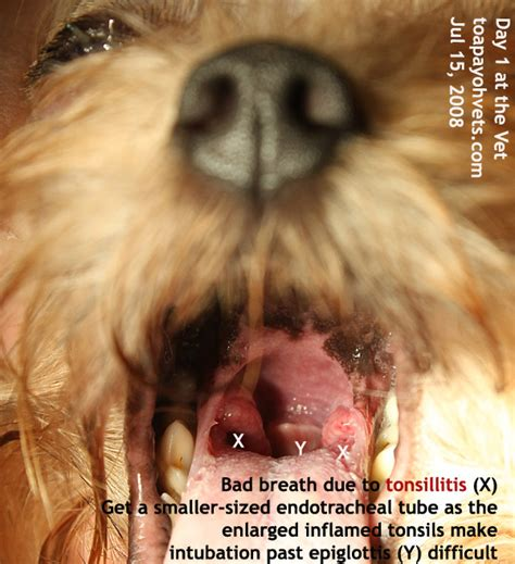 do dogs tonsils 031208asingapore toa payoh veterinary vets cat rabbits hamster veterinarian