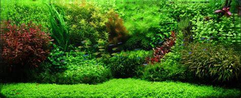 Aquascape Filters Micranthemum Monte Carlo 5cm Pot Sydney Discus World