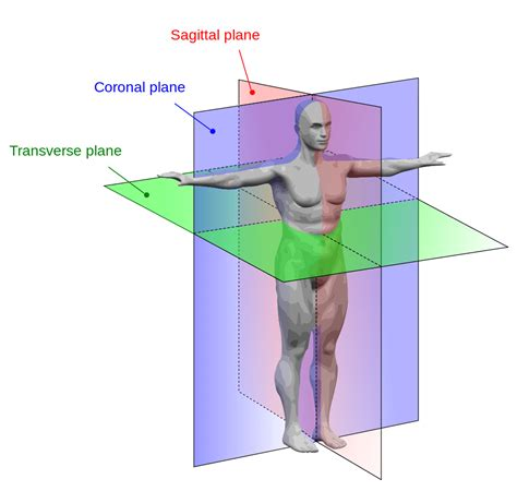 body planes and sections anatomicalplanes