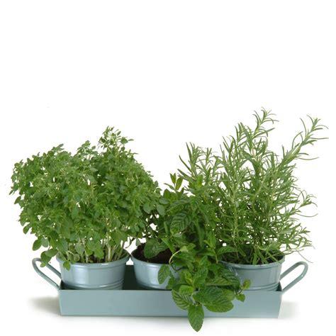 Enduro Mug Tray Mg T garden trading set of 3 pots on tray shutter blue iwoot