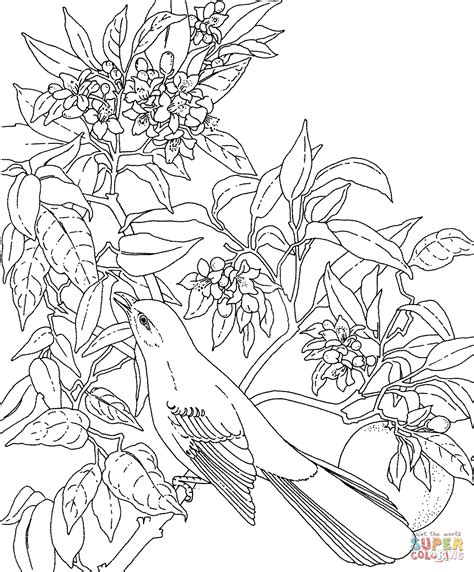 coloring pages of state birds and flowers mockingbird and orange blossom florida state bird and