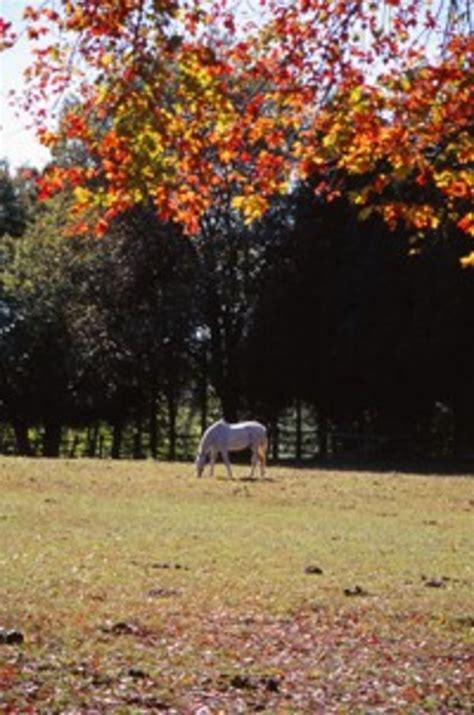 maple tree and horses protect your from maple poisoning the owner s resource