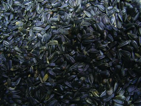 is black sunflower seeds for birds premium black sunflower bird seed mix birds choice