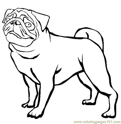 coloring pages of pugs dogs coloring pages pug animals gt dogs free printable