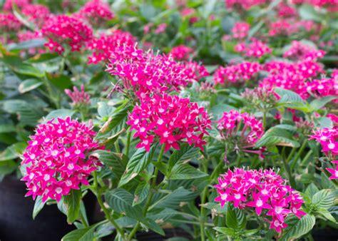 plant perennials in your south florida garden garden club