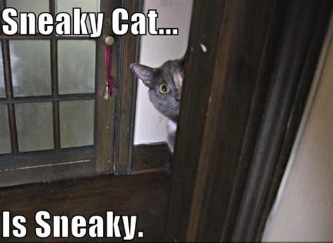 Sneaky Cat Meme - s for sneaky harder better faster stronger