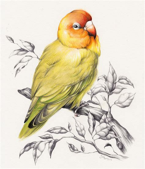 bird art drawing birds 1782212965 30 beautiful bird drawings and art works for your inspiration draw pictures of birds litle pups