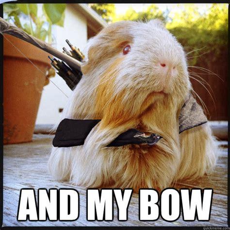 Guinea Pig Meme - funny guinea pigs memes