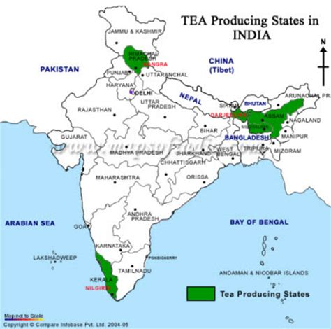 India   Tea Blog