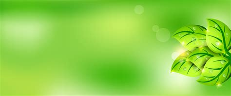 latar belakang daun hijau segar segar latar belakang daun