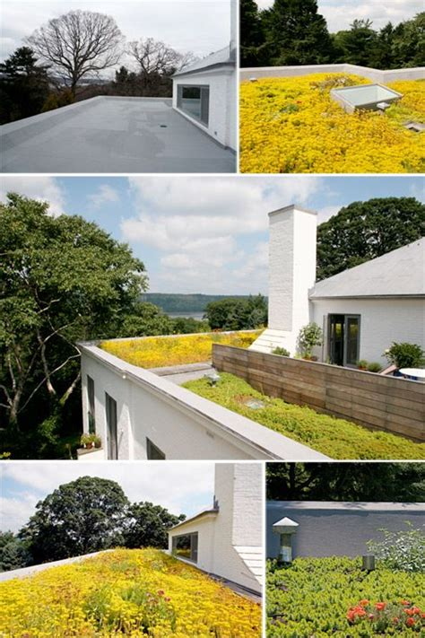 Just Two Fabulous Roof Gardens by 25 Best Ideas About Sedum Roof On Green Roofs