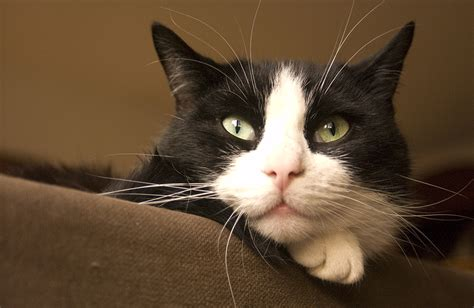 names for a black black and white cat names 49 awesome names for your cat