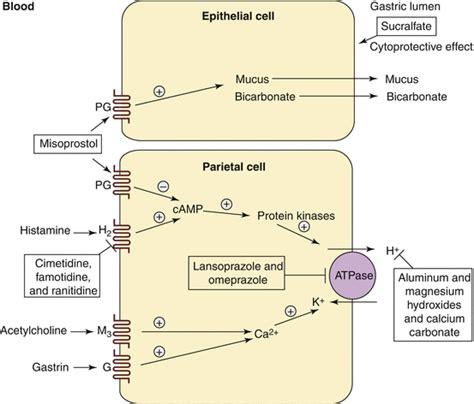 proton inhibitor mechanism of antacids gastrointestinal prokinetics and proton