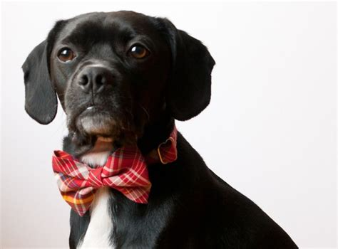 bow tie for dogs bow tie collars for dogs bloggie doggie