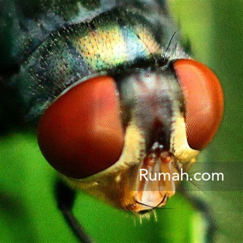 Kamar Tidur Cyprus Perangkap Nyamuk Dan Lalat Bebas Demam Berdarah jurus jitu agar rumah bebas serangga rumah dan gaya hidup rumah