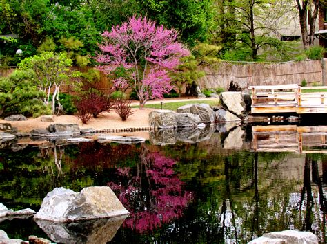 Japanese Cherry Blossom Garden Cherry Blossom Tree At Cherry Blossom Botanical Garden