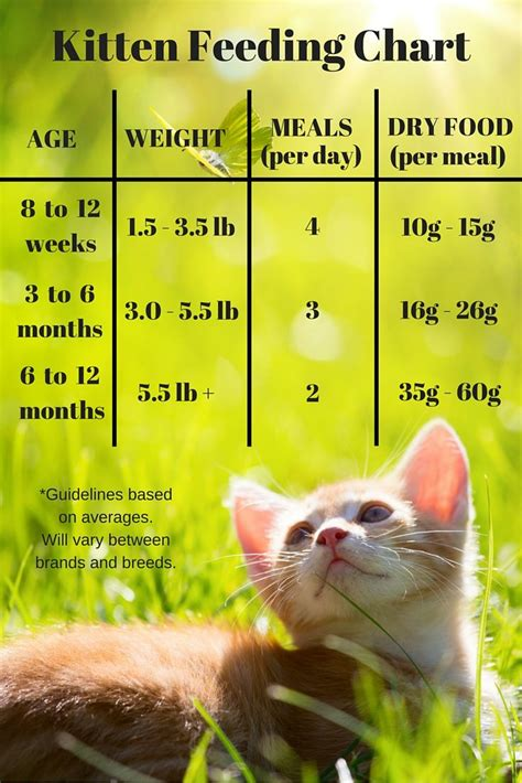 care food best 25 kitten care ideas on cat care tips