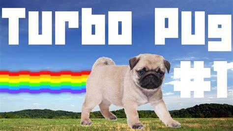 turbo pug turbo pug 1