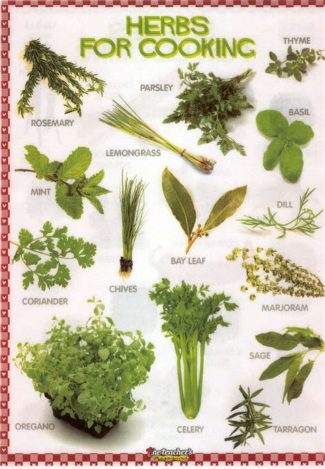 Kitchen Herbs herbs for cooking
