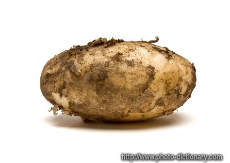 Potato Means by Lincoln Potato Photo Picture Definition At Photo