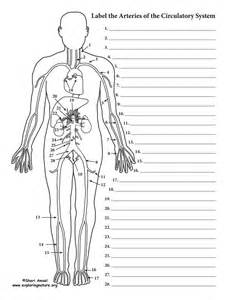 anatomy and physiology coloring workbook answers blood vessels blood vessels labeling circulatory system advanced