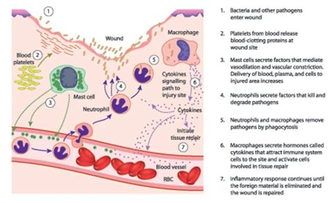Detox Symtoms Or Histamine Response by Histamine Intolerance How To Address The Root Cause