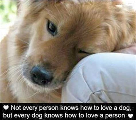 images of love dogs quotes about dogs treats a la bark