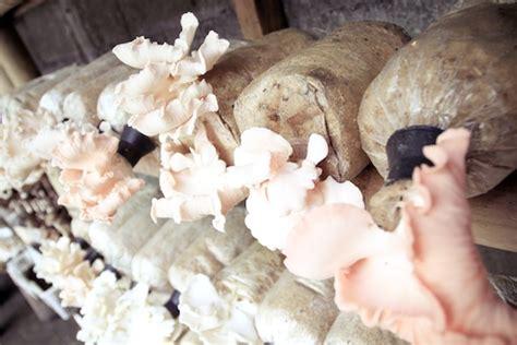 Bibit Jamur Tiram Area jejamuran dan aneka masakan jamur bomanta
