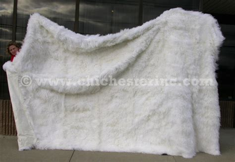 How To Clean An Alpaca Rug by How To Clean Rug Airglidecarpetcleaning