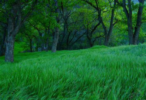 imagenes de paisajes verdes para pantalla bosque verde imagenes wallpapers paisajes fondos